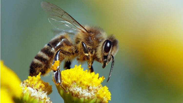 https://business-cool.com/wp-content/uploads/2019/02/journee-mondiale-abeille.jpg